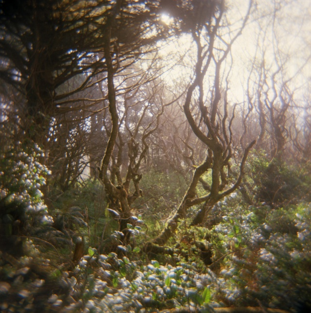 Camera: Holga 120NFilm: Kodak Ektar 100Location: Kalaloch - Olympic National Park, Washington State