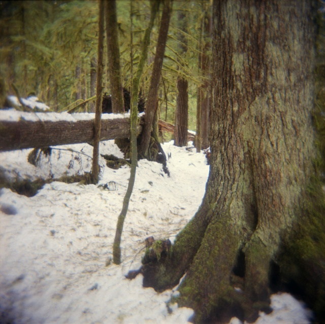 Camera: holga 120NFilm: Kodak Ektar 100Location: Mountain Loop Highway, Washington State