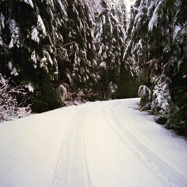 Camera: hasselblad 500cFilm: Kodak Portra 400Location: Just off the Mountain Loop Highway - Washington State